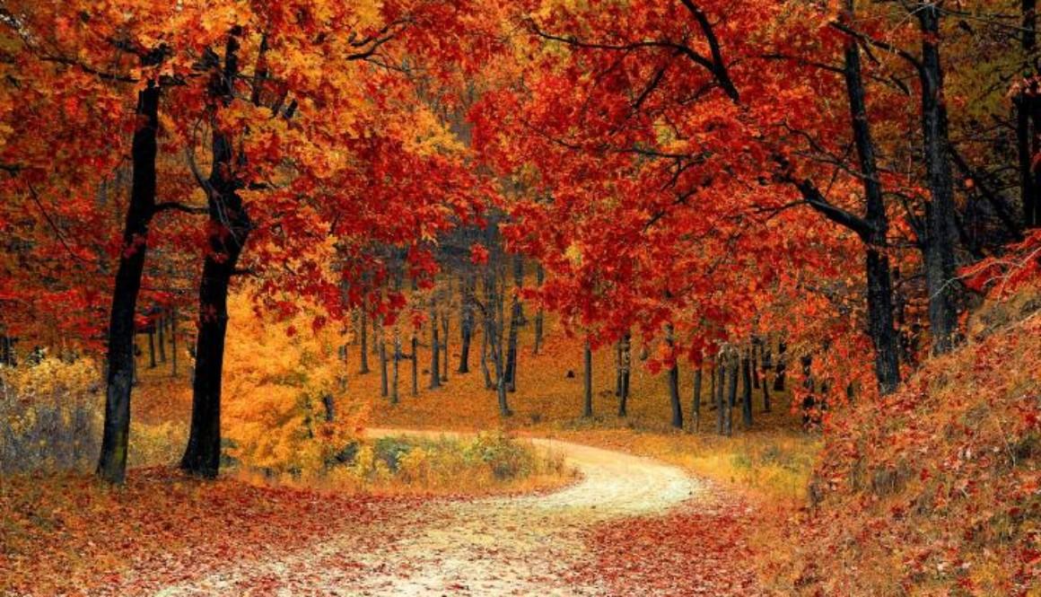 fall-1072821_1920_0